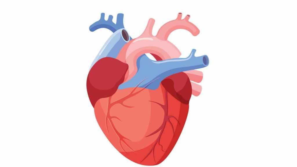 ¿ Cómo cuidas tu corazón ?